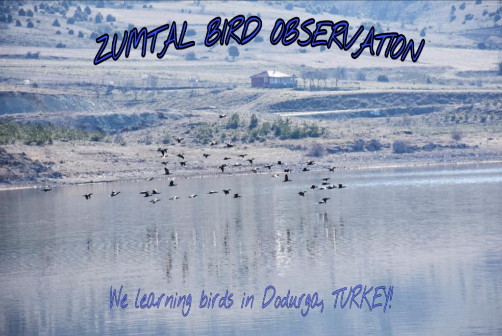 We observed birds everywhere ;)
