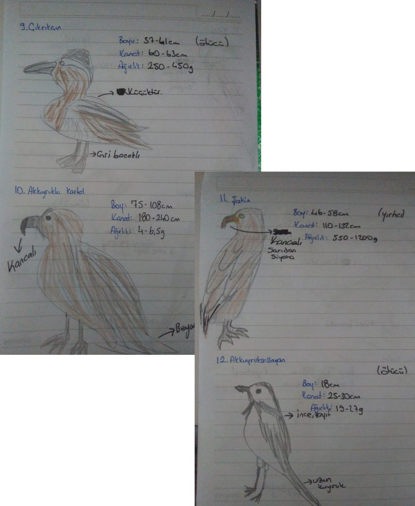 ZUMTAL BIRD OBSERVATION by elif akcan - Ourboox.com