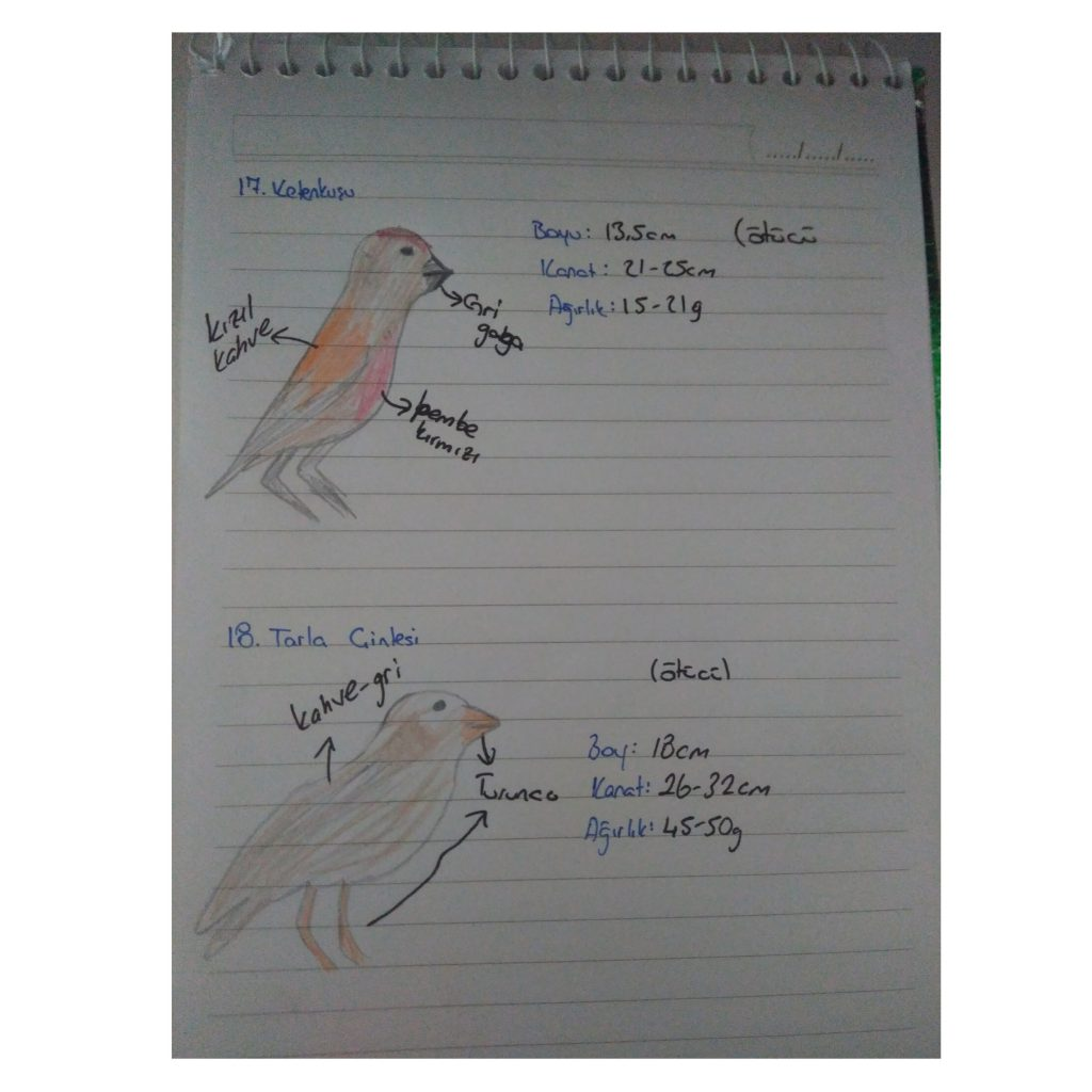 Artwork from the book - ZUMTAL BIRD OBSERVATION by elif akcan - Ourboox.com