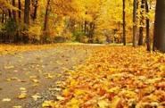 فصل الخريف by raya - Ourboox.com