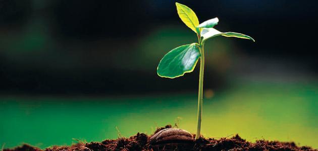النباتات الحية by Bayan - Illustrated by بيان - Ourboox.com