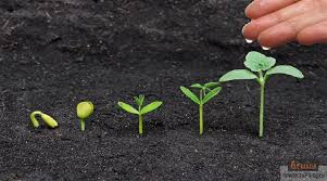 مراحل نمو النبتة by raeda - Illustrated by رائدة يوسف قدح  - Ourboox.com