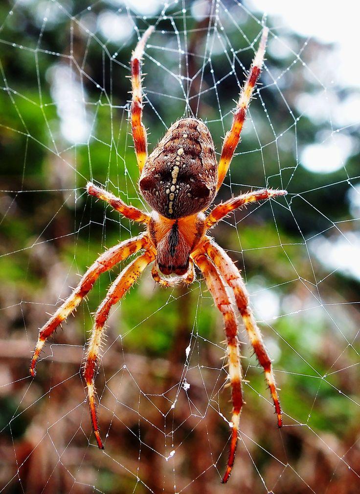 всей картинки про пауков все легко решается автосервисе