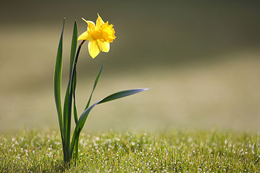 פרחים by shaked shaul - Illustrated by שקד שאול וקטיה בן זקן - Ourboox.com