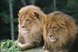 האריות של ילדי כיתה א'2 by Alina Pavlotzky - Ourboox.com