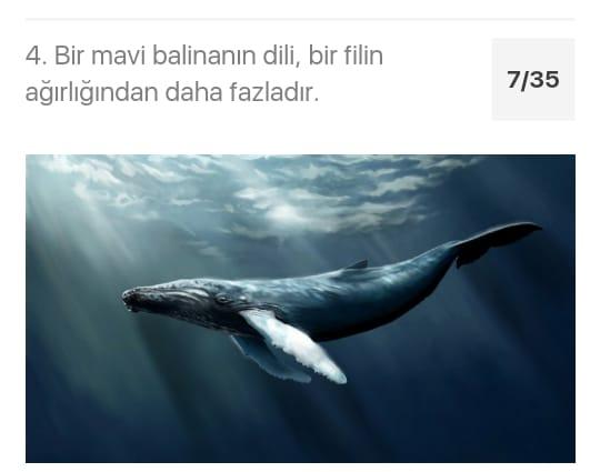 Çarşıbaşı Anadolu Lisesi Hayvanlarla Hayatına Değer Kat Projesi by azize kaya - Illustrated by Mervenur Eski - Ourboox.com