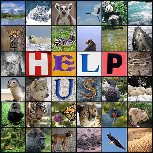 מאגר תמונות ליחידת הלימוד בנושא בעלי החיים by rawan - Illustrated by רואן שיח  - Ourboox.com