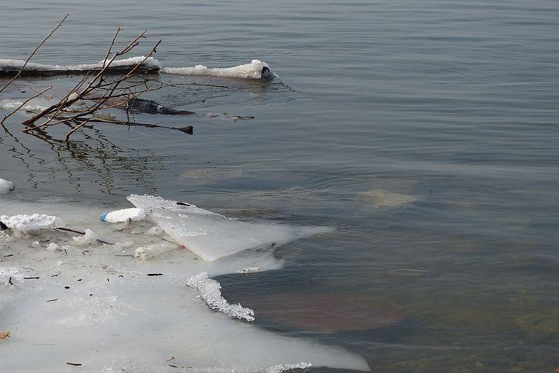 крайбрежен лед