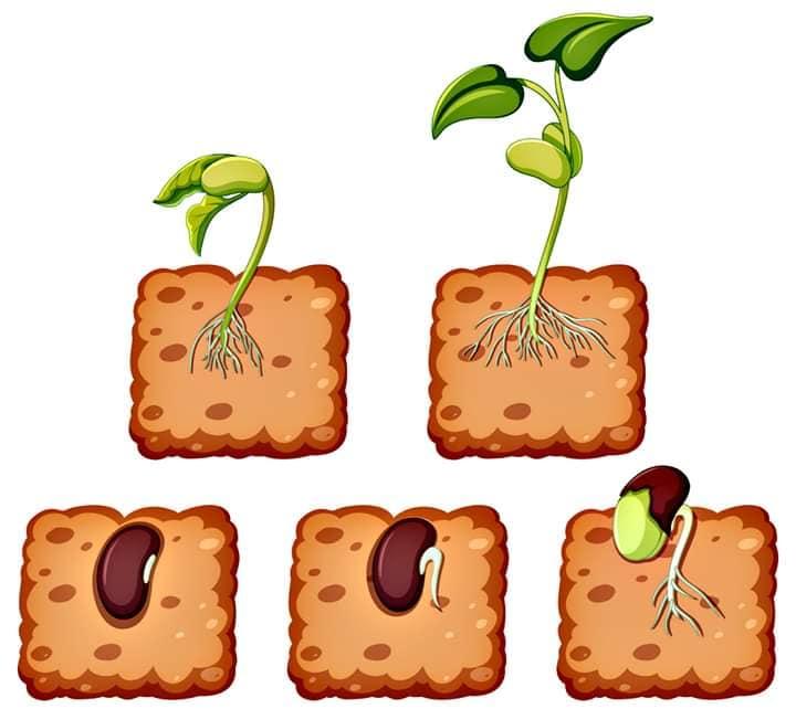 """"""" Растения,части на растенията и необходими условия за живот на растенията"""" by Irena Ivanova - Ourboox.com"""