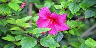 النبات الزهري
