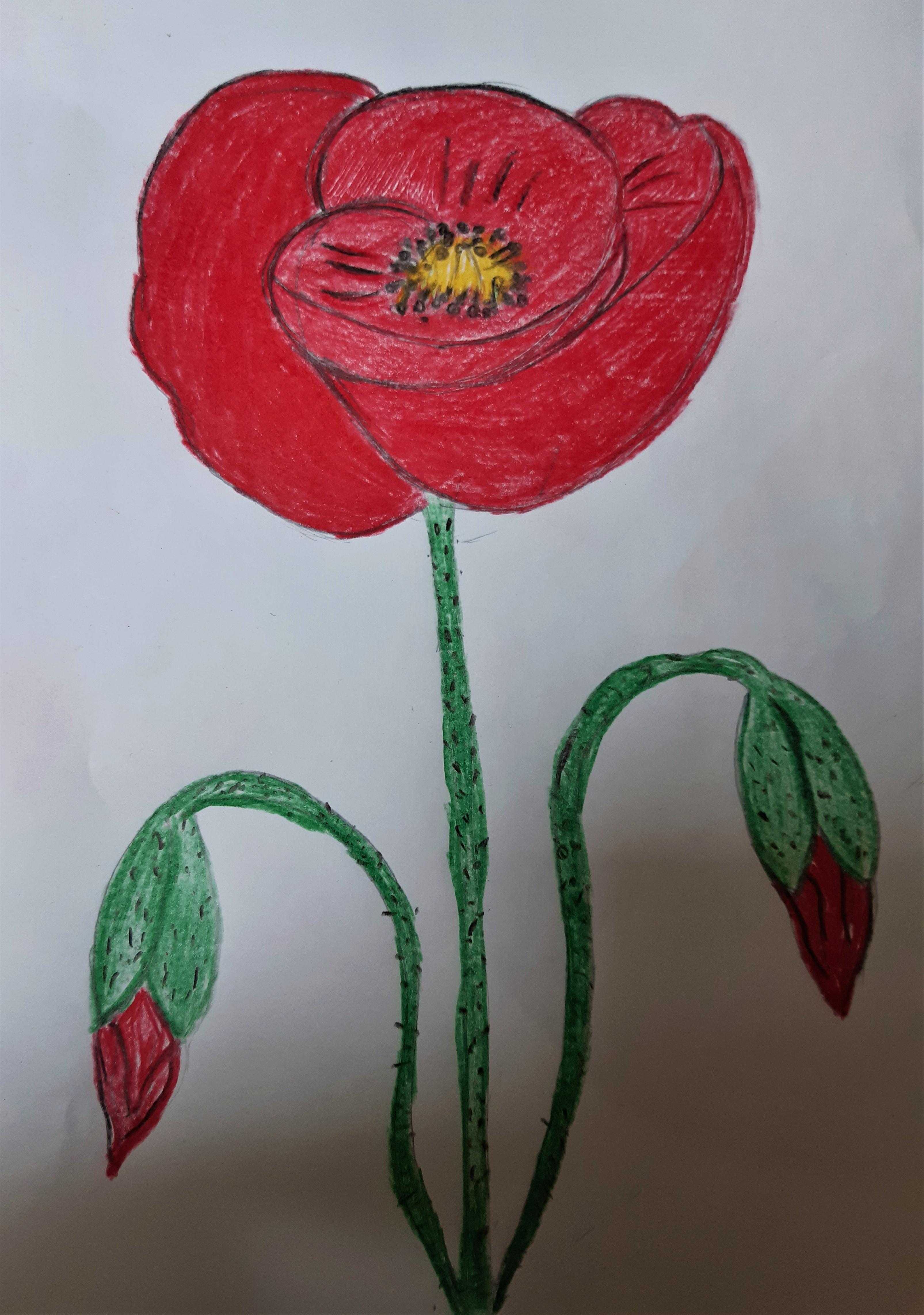 Il fiore della resistenza by Nadia Cristofaro - Ourboox.com