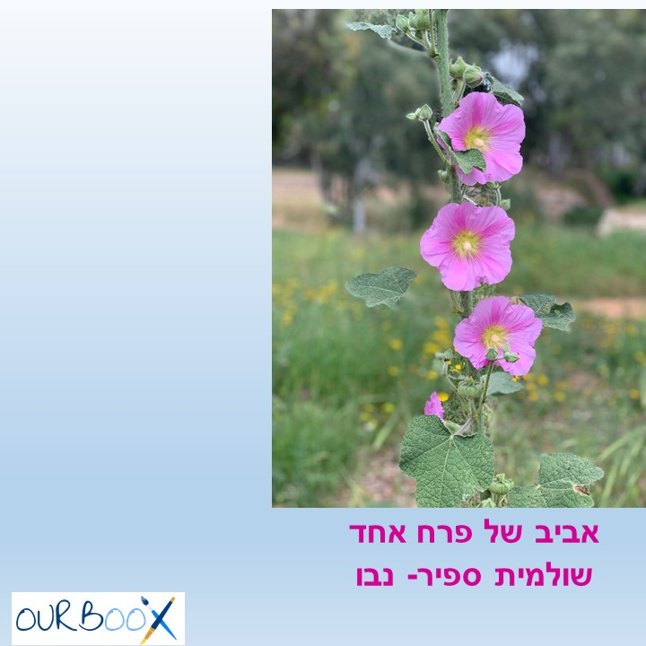 🌼אביב של פרח אחד by Shulamit Sapir-Nevo - Illustrated by שולמית ספיר-נבו - Ourboox.com