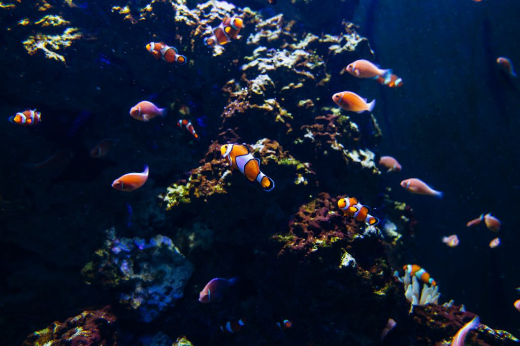 10 things you didn't know about fish by Raz Lev - Ourboox.com
