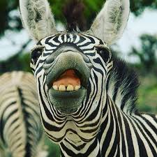 10 things we didn't know about Zebra by keren drai - Ourboox.com