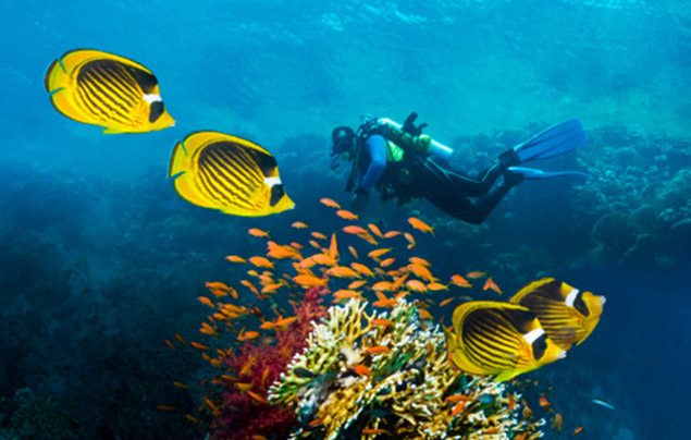 10 things you didnt know about the oceans by caroline weinberg - Ourboox.com