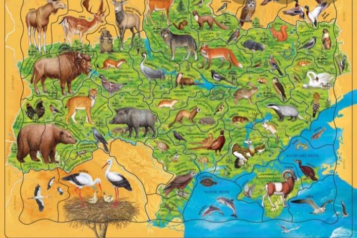 Червона книга моєї місцевості by Руслана  - Ourboox.com