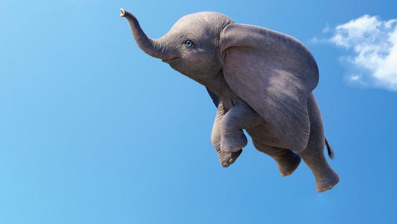 The little elephant by Bar Ben Avraham - Ourboox.com