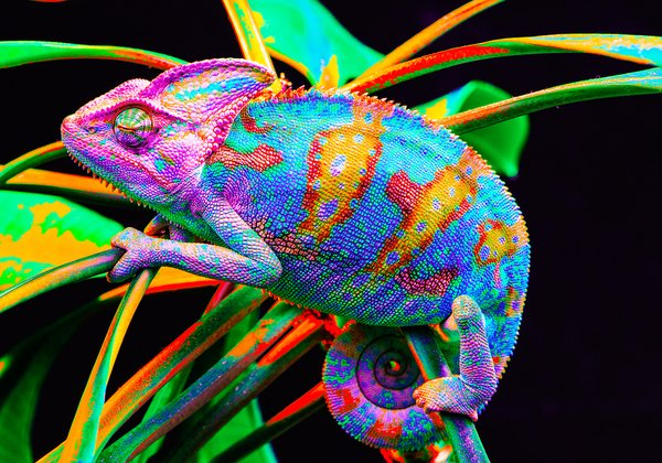 Nina's Rainbow by Bar Ben Avraham - Ourboox.com