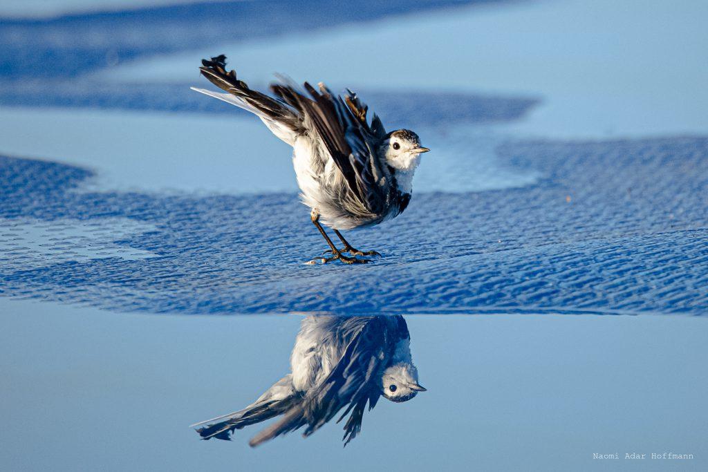 אורי רוצה לעוף by Naomi Adar Hoffmann - Illustrated by נעמי אדר הופמן - Ourboox.com