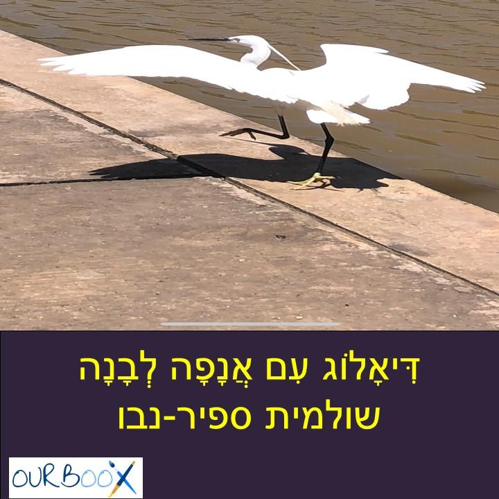 דִּיאָלוֹג עִם אֲנָפָה לְבָנָה by Shuli Sapir-Nevo Photo and Motto - Illustrated by Shuli Sapir-Nevo,  - Ourboox.com