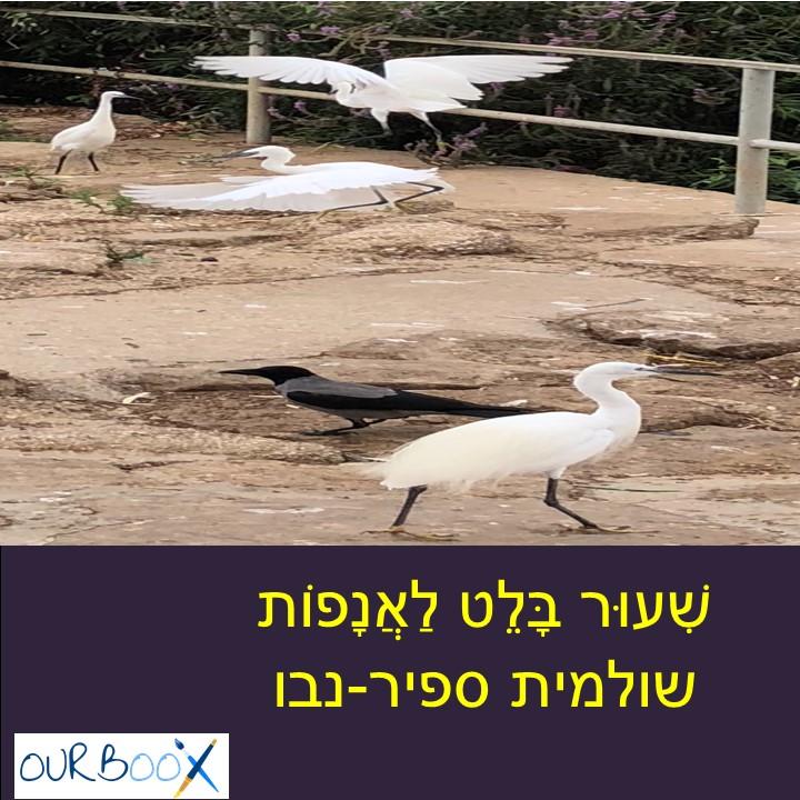 שִׁעוּר בָּלֵט לַאֲנָפוֹת by Shuli Sapir-Nevo Photo and Motto - Illustrated by שולמית ספיר-נבו - Ourboox.com