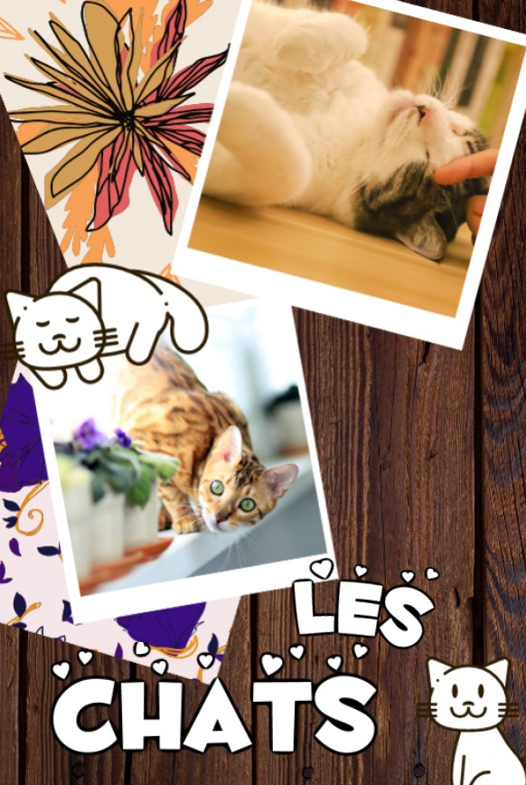 Les Chats by Magda Łatanik - Ourboox.com