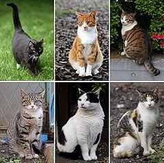 Котките by Teq - Ourboox.com