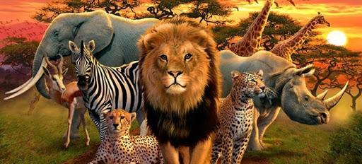 Світ тварин у мистецтві by Iruna - Ourboox.com