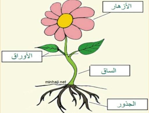 أجزاء النباتات by balsam - Ourboox.com