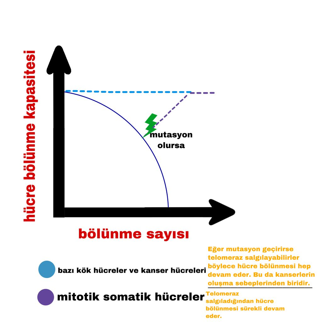 TELOMERLER by Defne Çağıran - Illustrated by Defne Çağıran - Ourboox.com