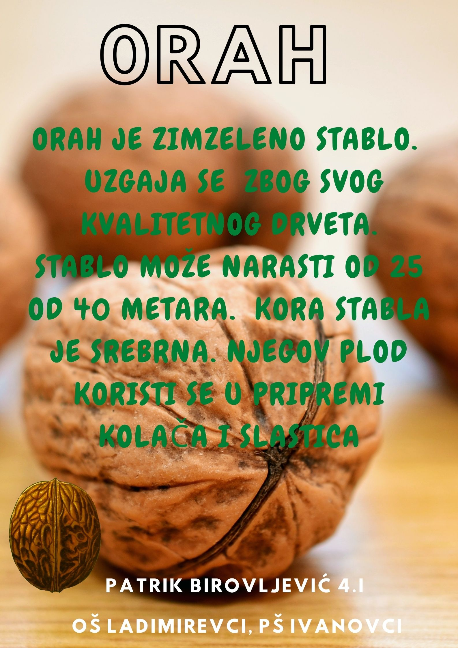 Abeceda biljaka by Biljana Popović - Ourboox.com