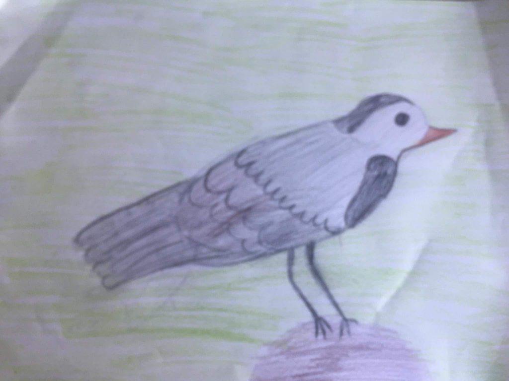 Paukščiai by Meilutė Andriukaitienė - Ourboox.com