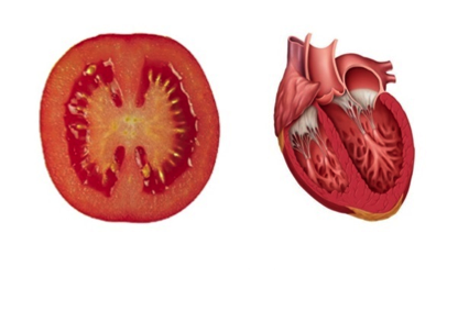 Which tomato is most delicious by Nofar Zilberman - Ourboox.com
