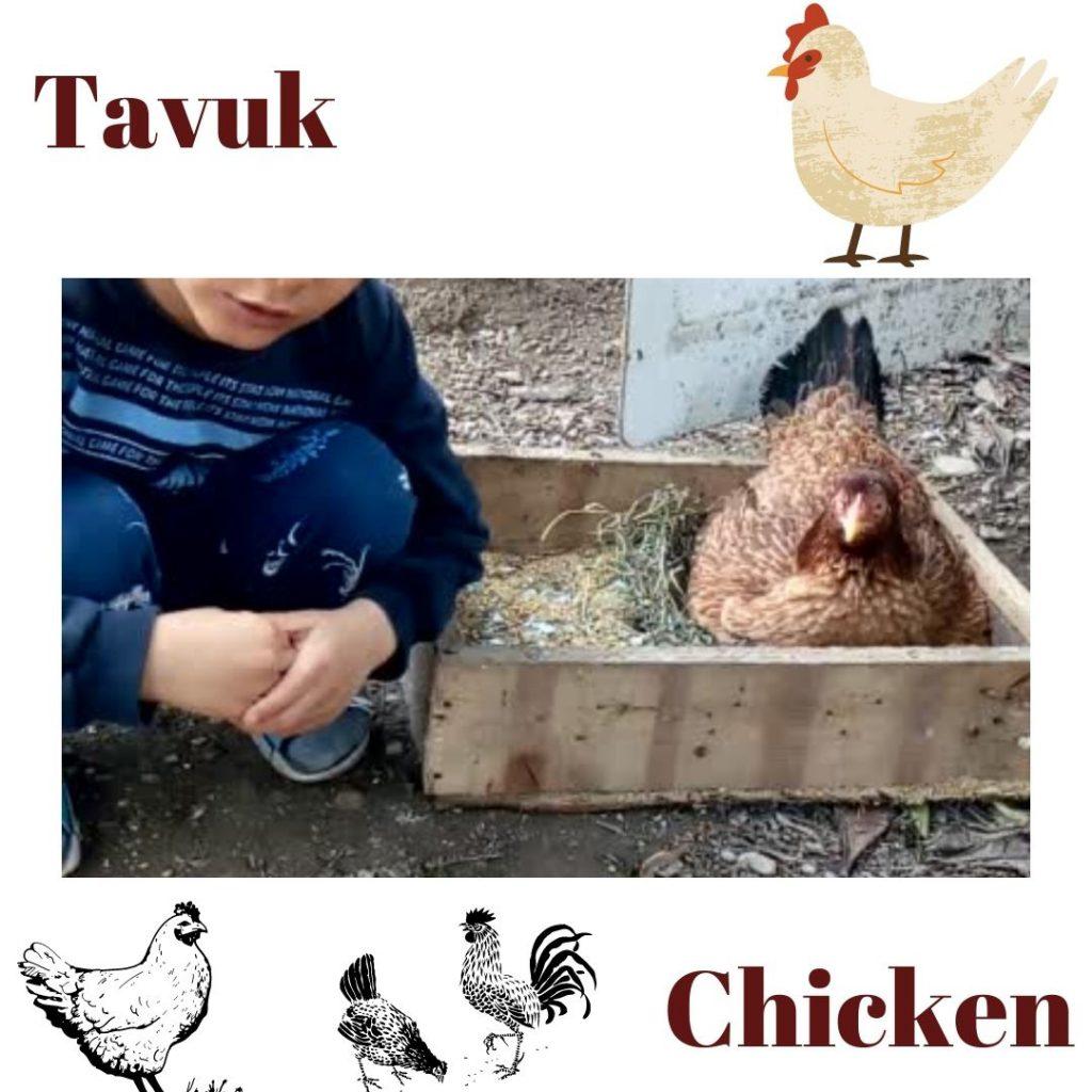HAYVANLARI TANIYALIM – LET'S LEARN THE ANİMALS by sukran  - Illustrated by Şükran Yenigelen - Ourboox.com
