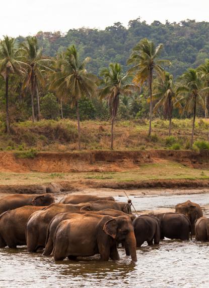 Koupání slonů