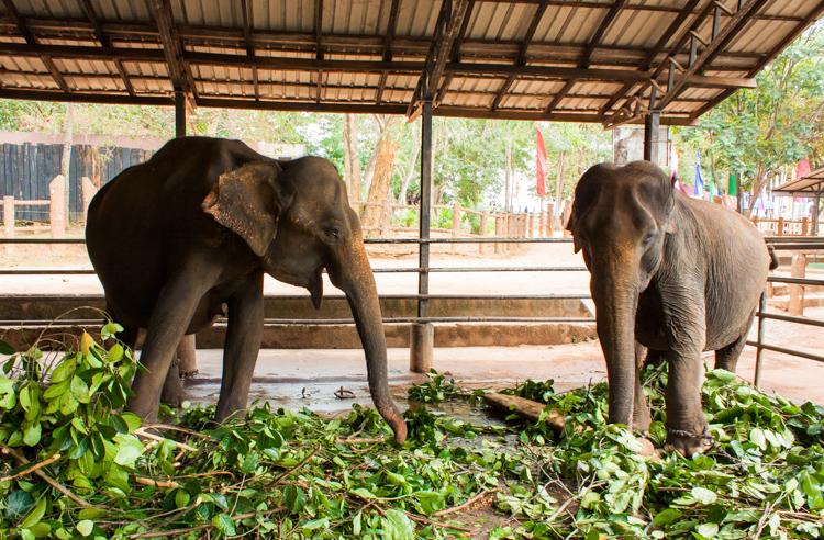 Krmení slonů
