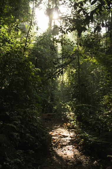Deštný prales Sinharaja