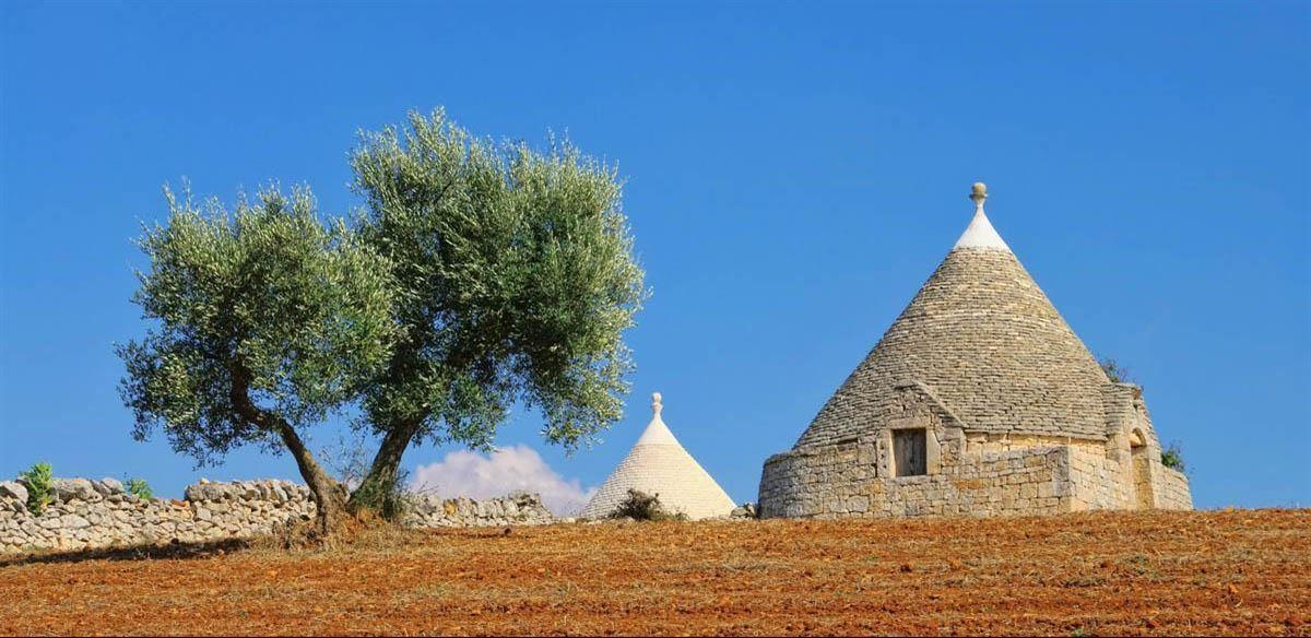 Olive Oil Harvest Tour