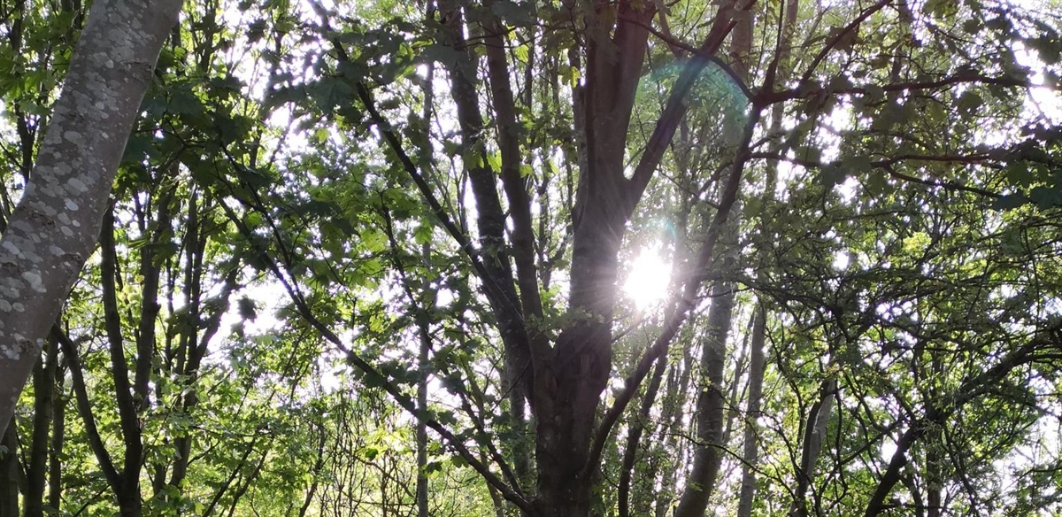 Forest Bathing Nature Connection Workshop tickets