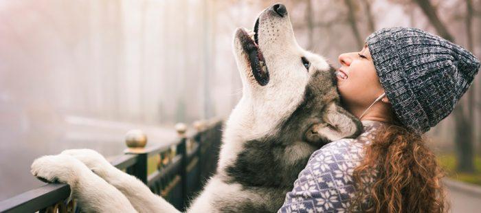 Planes para hacer con tu perro