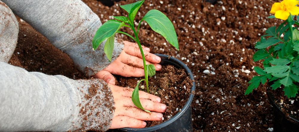 plantas-frio1