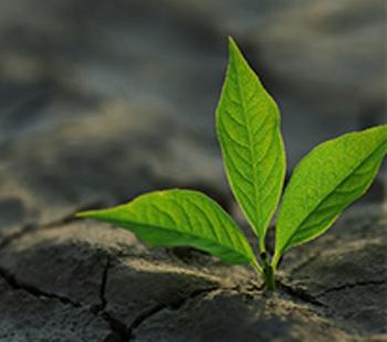 eco y sostenible