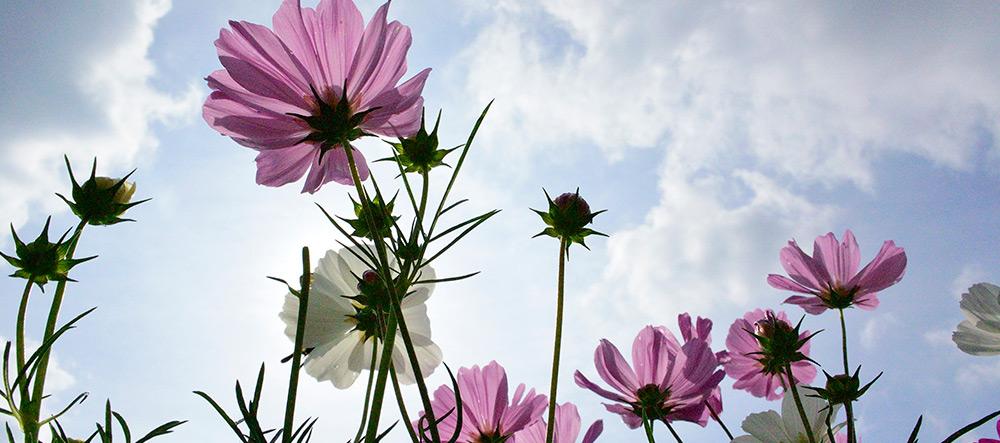 Conoces las flores más bonitas del mundo? | Páginas Amarillas