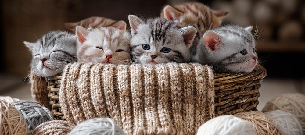 enferedades-problemas-gatitos
