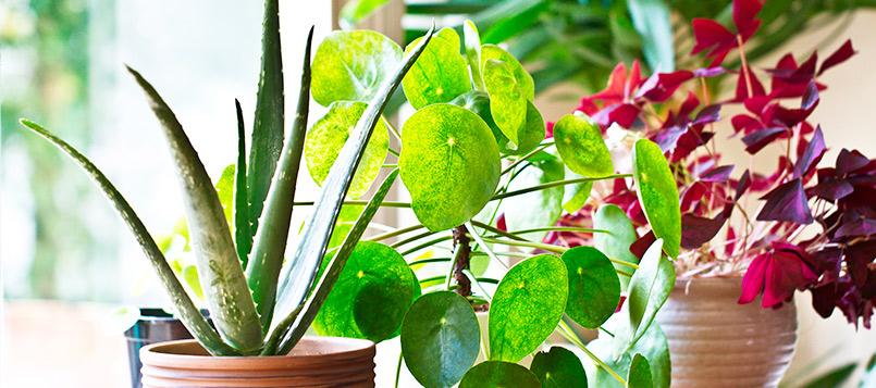 plantas-hardin