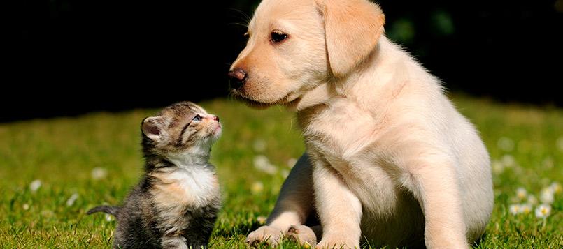 calor-perritos-gatitos