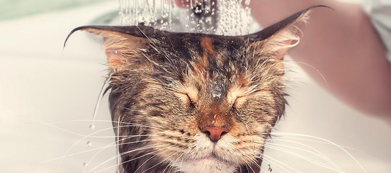 mascotas-mojar