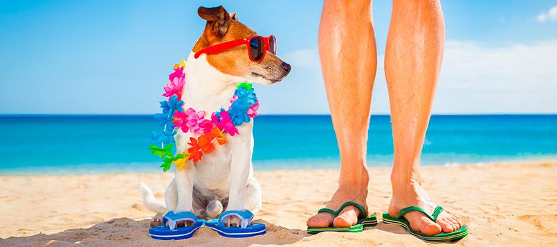 mascotas-playa