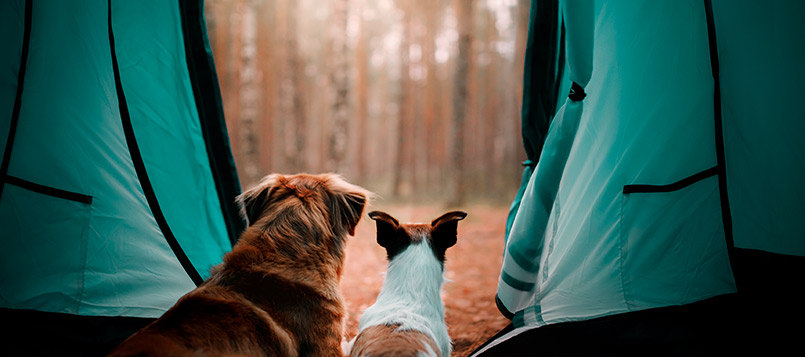 mascotas-viajar