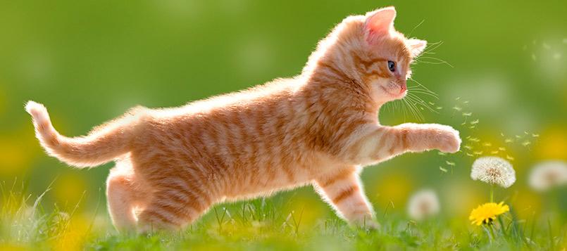 gatito-agosto